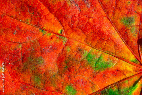 Painting like image of a maple leaf in autumn - 223043008