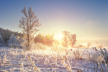 Amazing winter landscape at sunrise. Frosty winter. Snowy nature background. Christmas and New Year time. Scenery winter with sunlight in morning.