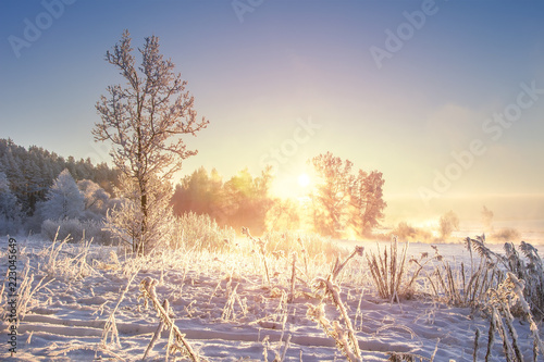 Leinwanddruck Bild Amazing winter landscape at sunrise. Frosty winter. Snowy nature background. Christmas and New Year time. Scenery winter with sunlight in morning.