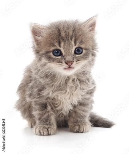 Jeden mały kotek.