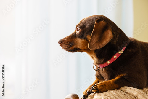 Little dog sitting on couch