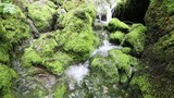 Slow motion beautiful sunny mossy rocks with stream. Dolly slider equipment used. - 223059804