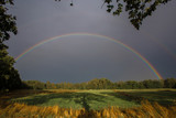 Complete double rainbow with dark clouds over green grassy field with long tree shadows and branches in foreground frame before sunset time and forest in the back - 223076898