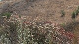 Beautiful wildflowers growing on the hills in a desert - 223101461