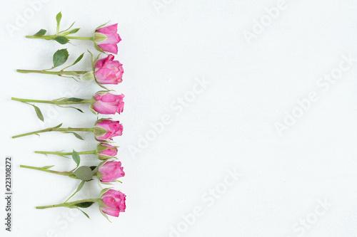 różowe róże na białym tle. flora botanika i przyroda. piękny kwiat tło matki lub dzień kobiet. koncepcja wolnego miejsca.