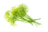 fresh dill flower isolated on white background - 223112275