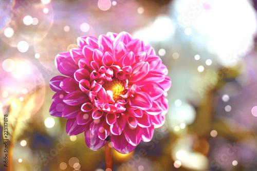Leinwanddruck Bild Grußkarte - Dahlien Blumenstrauß - Herbst