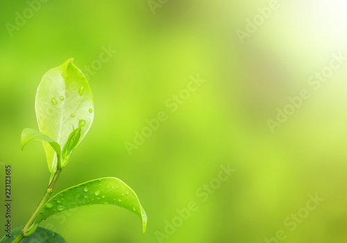 Leinwandbild Motiv Earth Day concept:Natural green plants landscape using as a background or wallpaper