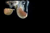 pieces of garlic under water on a dark background leave a beautiful trace - 223124469