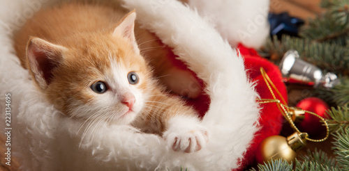 ginger kitten in santa hat against the background of a Christmas tree - 223134695
