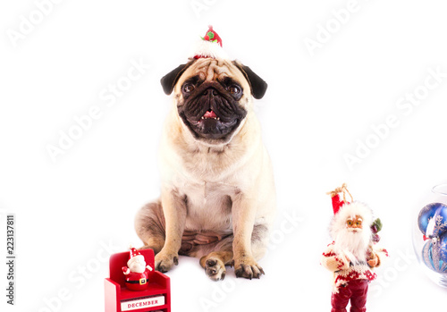 a pug sitting on a white background with the new year calendar on december 31 and