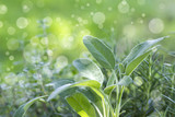 fresh herbs in a garden - 223145893