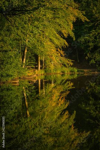 Leinwanddruck Bild Bäume Spiegelreflexion im Wasser