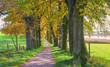 Leinwanddruck Bild - Eichenallee am Egglburger See im Herbst