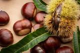 reife Früchte der Esskastanie und stachelige Schale leicht geöffnet, liegen auf dem Tisch - 223162898