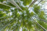 Japanese bamboo forest in arashiyama kyoto japan