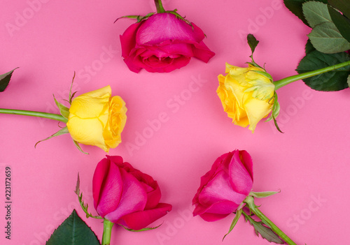 Bright pink and yellow roses forming a circle on a bright pink paper background, copy space in the center for your text (flat lay, top view) - 223172659