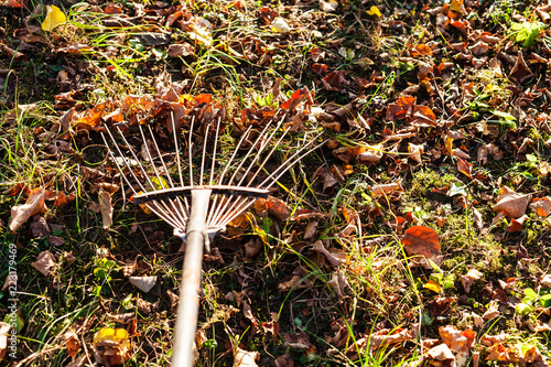 removing fallen leaves from lawn with garden rake