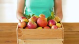 farming, gardening and harvesting concept - woman with wooden box of ripe apples - 223194699