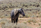 Wild Horse in the High Desert of Colorado