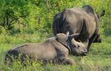 wildlife on safari - 223217644