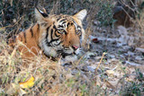 The king of Ranthambore
