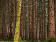 Leinwanddruck Bild - Eine Aufnahme vom Wald mit vielen Bäumen und Moos