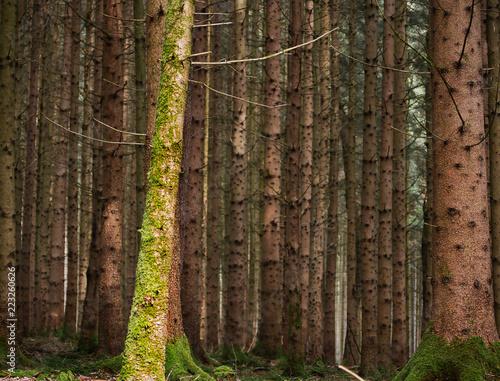 Leinwanddruck Bild Eine Aufnahme vom Wald mit vielen Bäumen und Moos