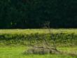 Leinwanddruck Bild - Trockener Ast in der Wiese mit Weg vor Baumgruppe