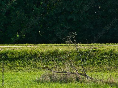Leinwanddruck Bild Trockener Ast in der Wiese mit Weg vor Baumgruppe