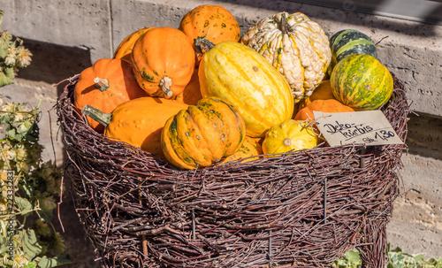 Leinwanddruck Bild Zierkürbisse Herbstliche Deko