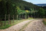Waldweg in der Eifel zum Wandern spazieren gehen im Sommer bei Sonnenschein