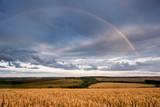Wheat field at sunrise - 223339820