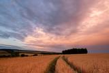 Wheat field at sunrise - 223339869