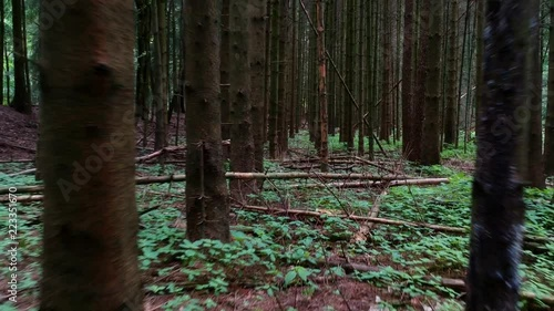 Reverse dolly shot at low level through a dense and dark pine forest. The trees have no leaves and the atmosphere is very gloomy and foreboding.