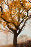 Tree in a park at foggy autumn morning - 223356890