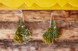 Herbaceous plants - St. John's wort and chamomile dried on rope