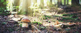 Porcini mushroom in the autumn forest. Nature background.