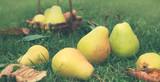 Basket of fresh pears in the garden