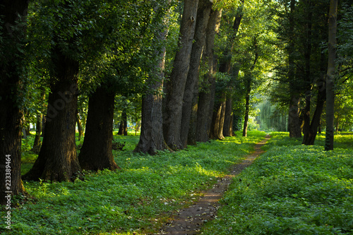 park outdoor natural forest alley way ground track for walking between high trees and bright green grass environment in fresh morning weather
