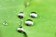 Leinwandbild Motiv Dew drop on leaf macro close.