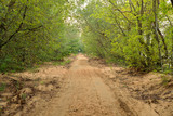 Road in deciduous forest at summer.