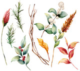 Watercolor set with leaves and berries. Hand painted fir branch, snowberry, yellow leaves isolated on white background. Illustration for design, print or background. - 223420676