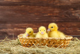 Little yellow ducklings in basket on hay - 223422686