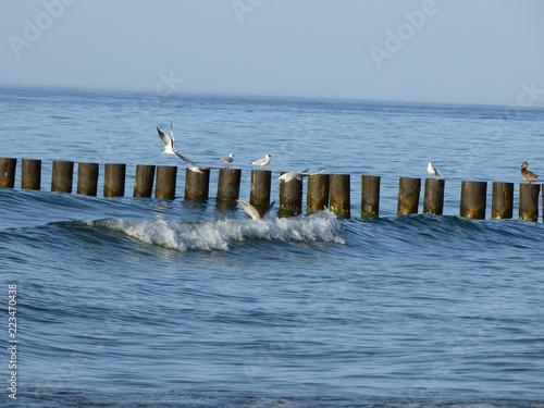 Mewy łowią ryby.
