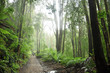 Quadro Temperate Rainforest in Tasmania