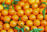 background of small orange mandarins from Sicily