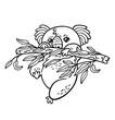 Hand drawing vector koala in cartoon style. Animal contour sketch - 223481455