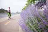 Lavender lilac bush grows on the roadside - 223489462