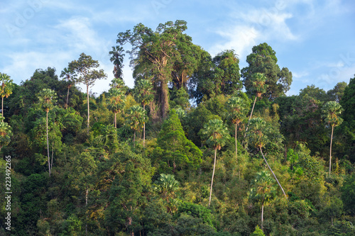 Krajobraz tropikalny las deszczowy wzgórze